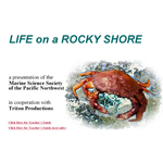 Life on a Rocky Shore Cover